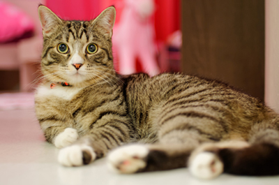 gatto detergente naturale